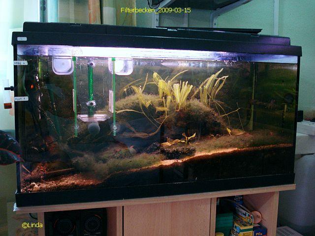Солоноватоводный (солноводный) аквариум Filterbecken_2009-03-15